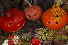 Halloweenowa bani głowy dźwigarka kosmos kopii Pojęcie zdjęcia stock