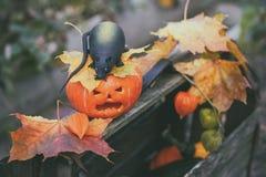 Halloweenowa bania i szczur na drewnianym pudełku wśród jesieni ulistnienia Zdjęcia Stock