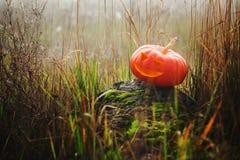 Halloweenowa bania w trawie zdjęcia royalty free