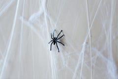 Halloweenowa dekoracja czerni zabawki pająk na pajęczynie Zdjęcia Stock