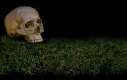 Halloweenowa straszna ludzka czaszka na zielonym ciemnym lasowym mech Obraz Stock