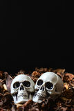 Halloweenowe czaszki Zdjęcie Stock