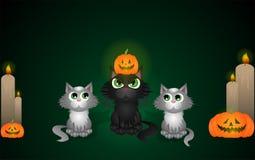 Halloweenowi koty Obrazy Stock