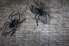 Halloweenowi pająki odizolowywający na drewnianym tle zdjęcie royalty free