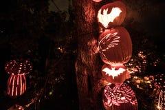 Halloweenowy blask Obrazy Stock