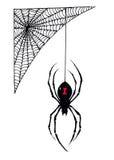 Halloweenowy Czarnej wdowy pająk Wiesza od swój sieci royalty ilustracja