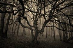 Halloweenowy drzewo z rozciągniętymi gałąź Obrazy Royalty Free