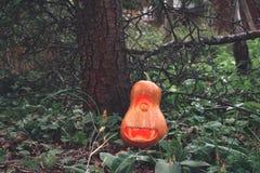 Halloweenowy dyniowy kolonel w drewnach na trawie blisko drzewa Obrazy Stock