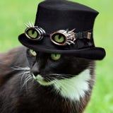 Halloweenowy kot Obrazy Stock