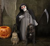 Halloweenowy kot 2 i pies zdjęcie royalty free