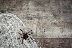 Halloweenowy tło: Pająk i pajęczyna na nieociosanym drewnianym stole obraz stock