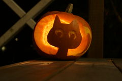 Halloweenpumpkin of a cat Royalty Free Stock Images