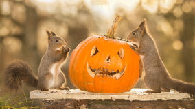 Halloweens together Stock Photography