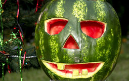 Halloweens watermelon under the christmas tree Stock Images