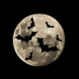 Hallowen bat flies in the moon. Hallowen bat in the dark night is set against the silhouette of the moon Stock Images