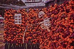 Hallowen in Mexico, Dag van de doden die, Mexico aanbieden royalty-vrije stock fotografie