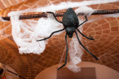 Hallowen spider Stock Images
