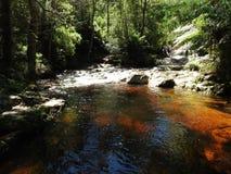 Halls Falls, Pyengana, Tasmania Royalty Free Stock Images