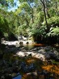 Halls Falls, Pyengana, Tasmania Stock Image