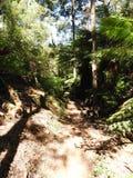 Halls Falls Walking Track, Pyengana, Tasmania Royalty Free Stock Photography
