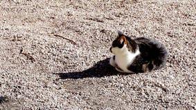 Hallstatt cat Royalty Free Stock Images