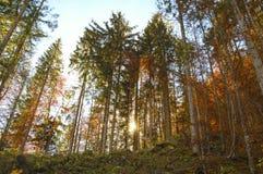 Hallstatt skog, Österrike Arkivbilder