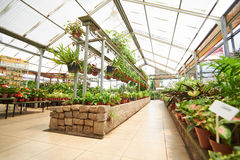 Hallway with many plants in garden center Royalty Free Stock Photos