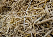 Halm stack. dry stems and leaves of small cereals. Jpg stock images