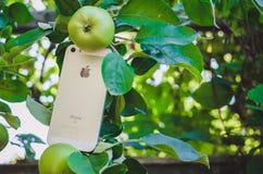 HALMSTAD, SUECIA - 9 DE AGOSTO DE 2018: imagen del concepto del nuevo SE blanco o de plata del iphone de la manzana en manzano re imagen de archivo