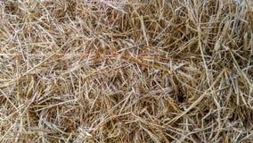 Halmtäcka bakgrund för taket eller för torrt gräs Fotografering för Bildbyråer