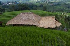 Halmtäckt koja som förbiser terrasserade risfält Arkivfoton