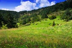 Halna łąka w august dniu Fotografia Royalty Free