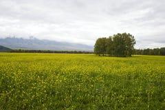 halna dolina Obrazy Stock