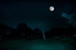 Halna droga przez lasu na księżyc w pełni nocy Sceniczny noc krajobraz zmrok - niebieskie niebo z księżyc Azerbejdżan Tęsk żaluzj Zdjęcie Royalty Free