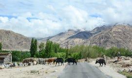 Halna droga w Ladakh, India Zdjęcia Stock