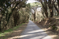 Halna droga wśród drzew Obrazy Royalty Free