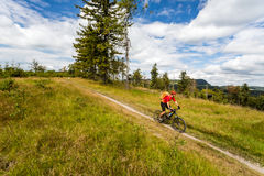 Halna jechać na rowerze mężczyzna jazda w drewnach i górach Zdjęcie Royalty Free
