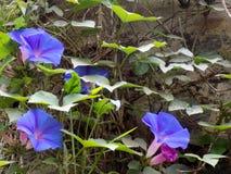 Halna kwiatonośna roślina fotografia royalty free