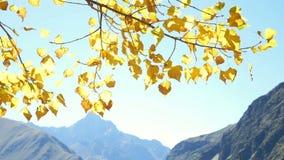 Halna las gałąź jesień zbiory
