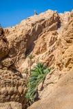 Halna oaza Chebika przy granicą Sahara, Tunezja, Afryka Obrazy Stock