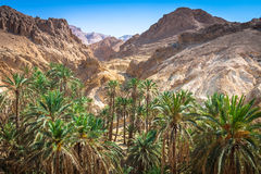 Halna oaza Chebika przy granicą Sahara, Tunezja, Afryka Obraz Royalty Free