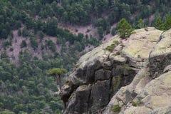 Halna rockowa formacja na wycieczkować ślad, Corse, Francja Zdjęcia Royalty Free