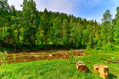 Halna rzeka i drewno Zdjęcie Royalty Free