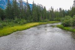 Halna rzeka na słonecznym dniu Obrazy Stock