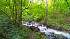 Halna rzeka płynie nad skałami w zielonym lesie zbiory wideo