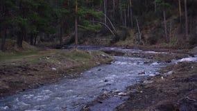 Halna rzeka płynie od lasu zbiory