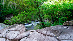Halna rzeka po środku lasu, w Tasikmalaya, Zachodni Jawa, Indonezja fotografia royalty free
