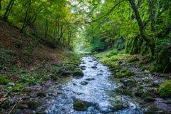 Halna rzeka przez lasów Zdjęcie Stock