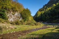 Halna rzeka przez lasów Obrazy Stock