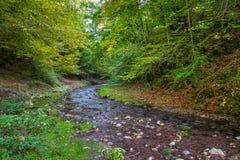 Halna rzeka przez lasów Fotografia Stock